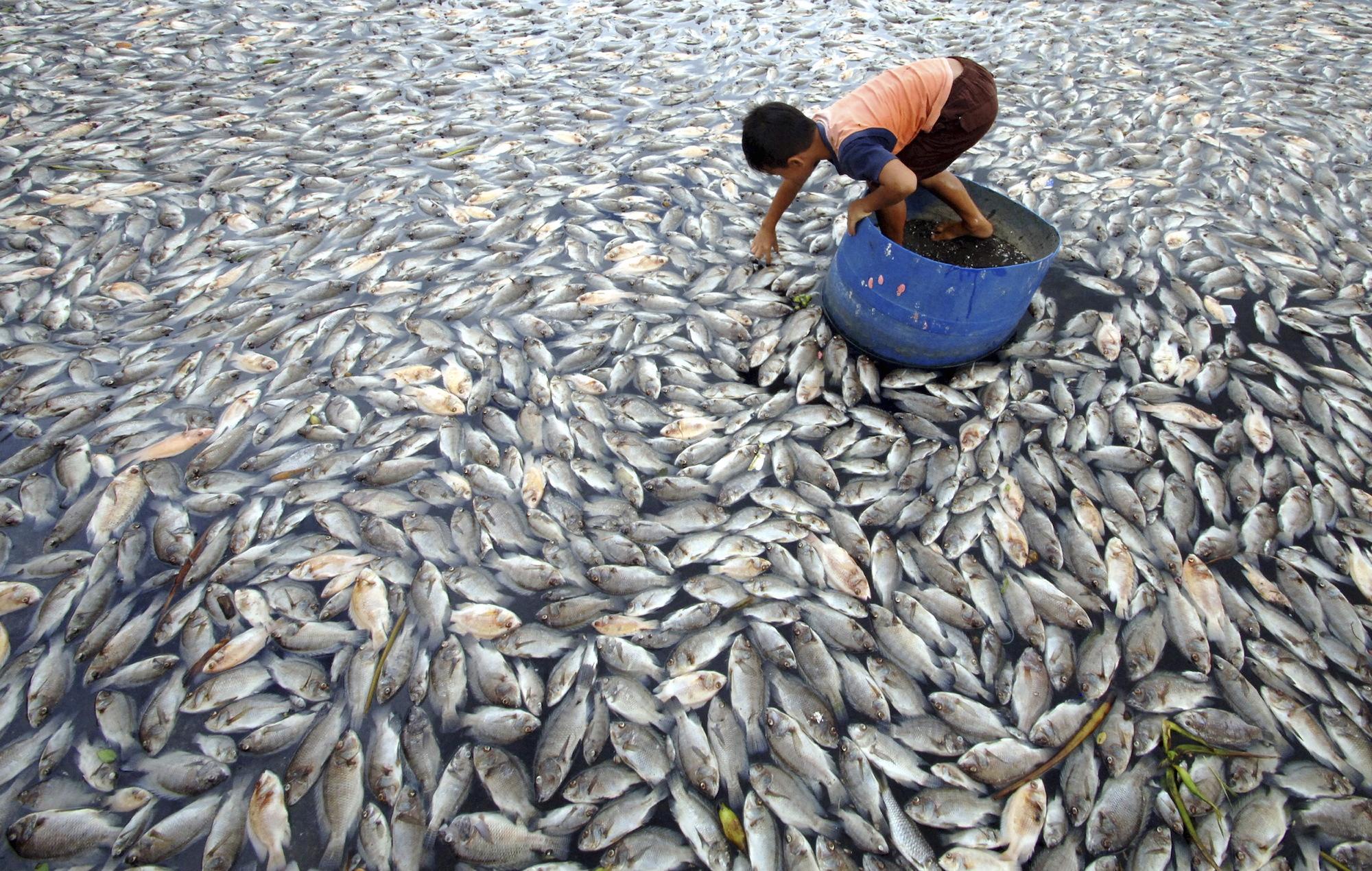 Dead fish farm