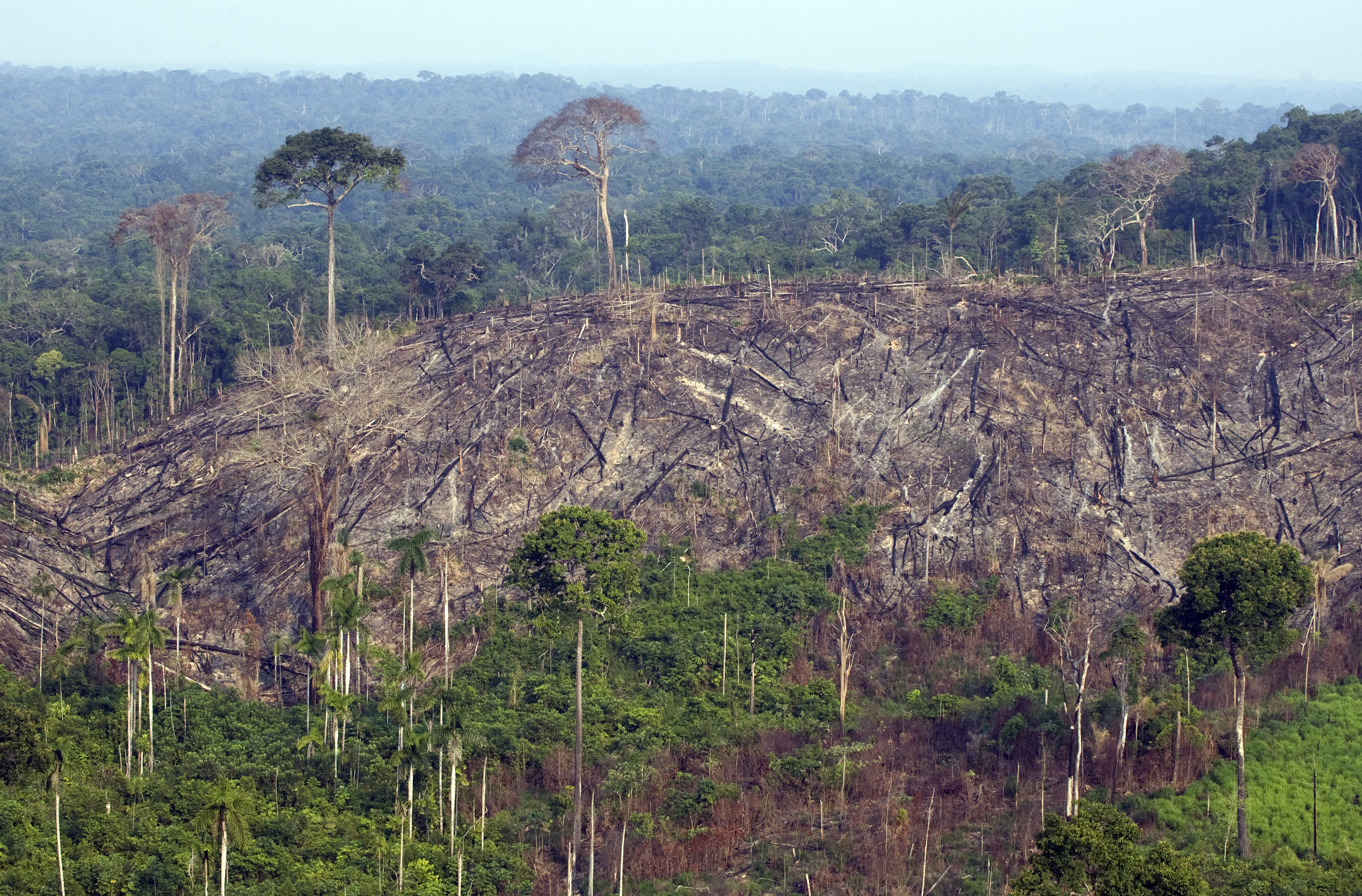 a report on the deforestation in brazil Deforestation continues, the report says, because cleared land is worth more than forested land in the amazon, so there is a strong economic incentive to a bertin group cattle truck on the pa 250, near marabá, brazil deforestation could be greatly reduced and beef production could rise with greater.