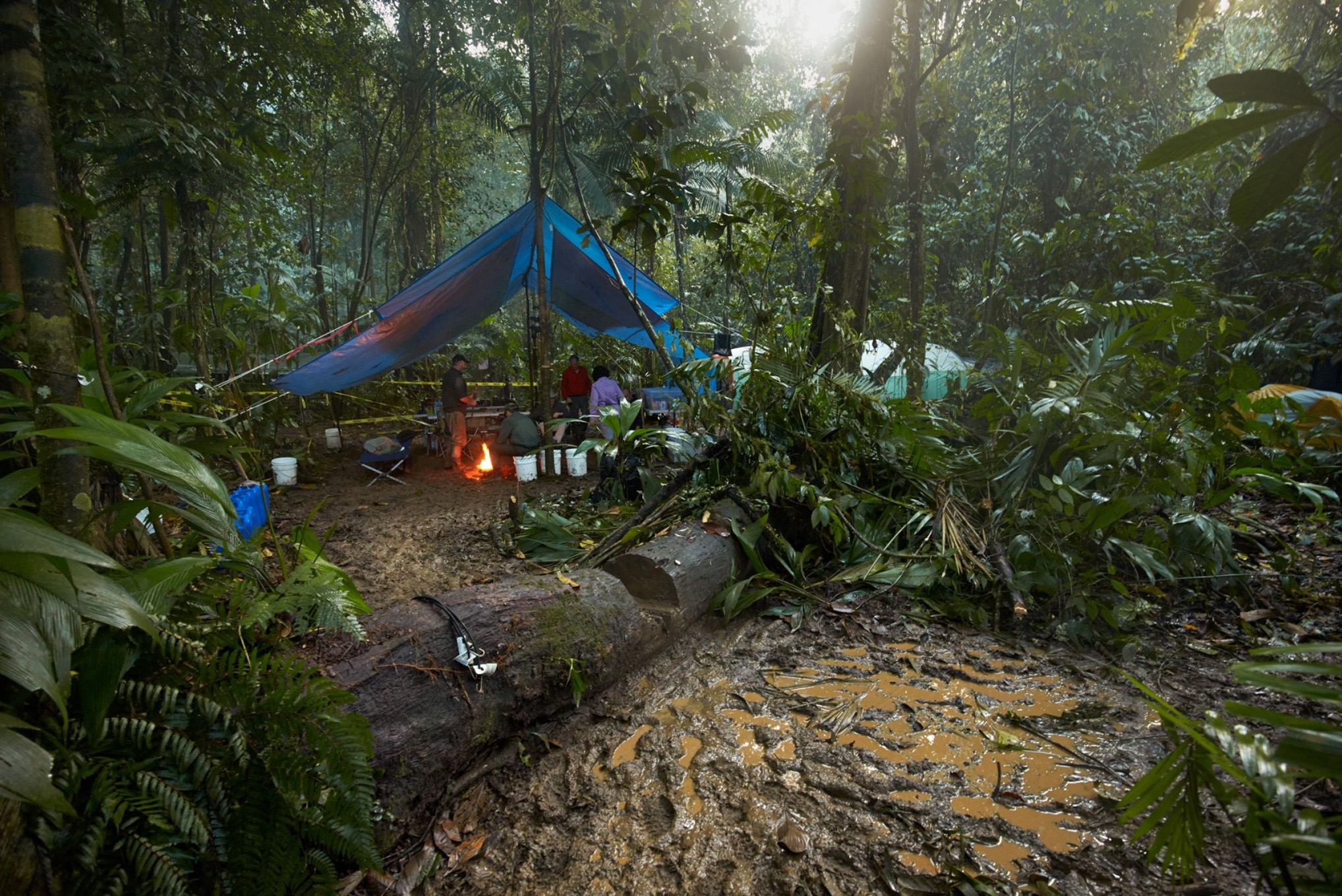 "The ""kitchen"" area of the expedition's camp deep in the Mosquitia jungle, 2015. The area was so remote, the animals apparently had never seen people before and wandered about, unafraid."