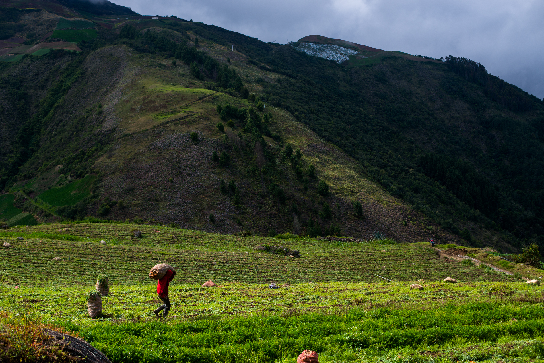 A ranch hand working at a farm in the central Venezuelan plains.