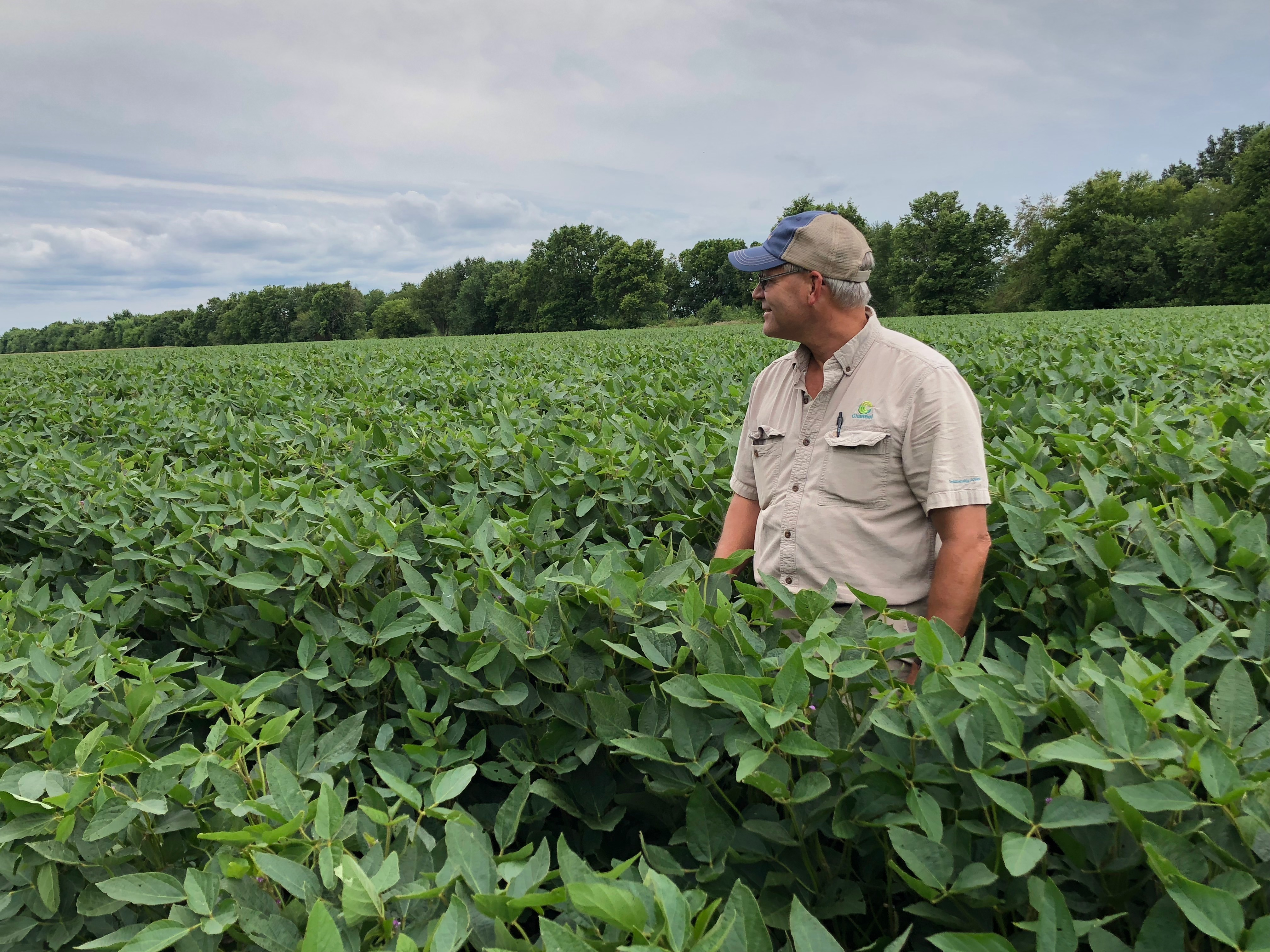 Illinois farmer Mark Reichert stands in his soybean fields. Reichert worries about the long-term impacts of Chinese tariffs, that it could be hard to get Chinese customers back.