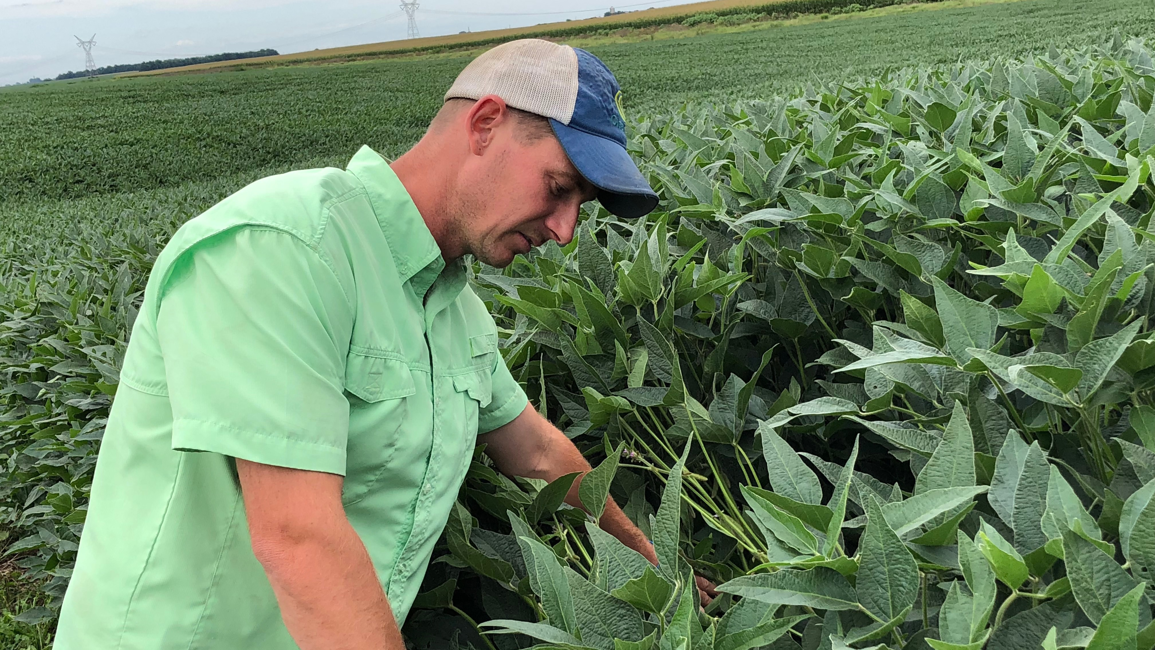 Soy farmers like Phil Sidles have seen prices for their soybeans fall sharply — down around 20 percent since May, not long after China announced retaliatory tariffs on American soybeans.