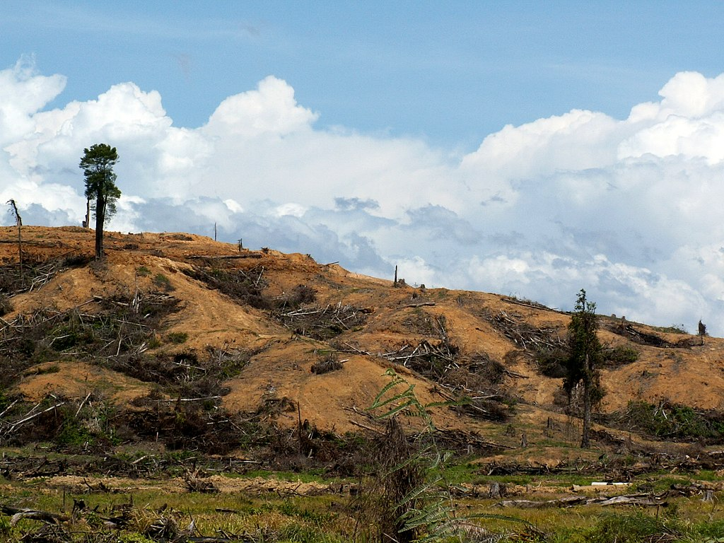 Rainforest cleared for palm oil plantation
