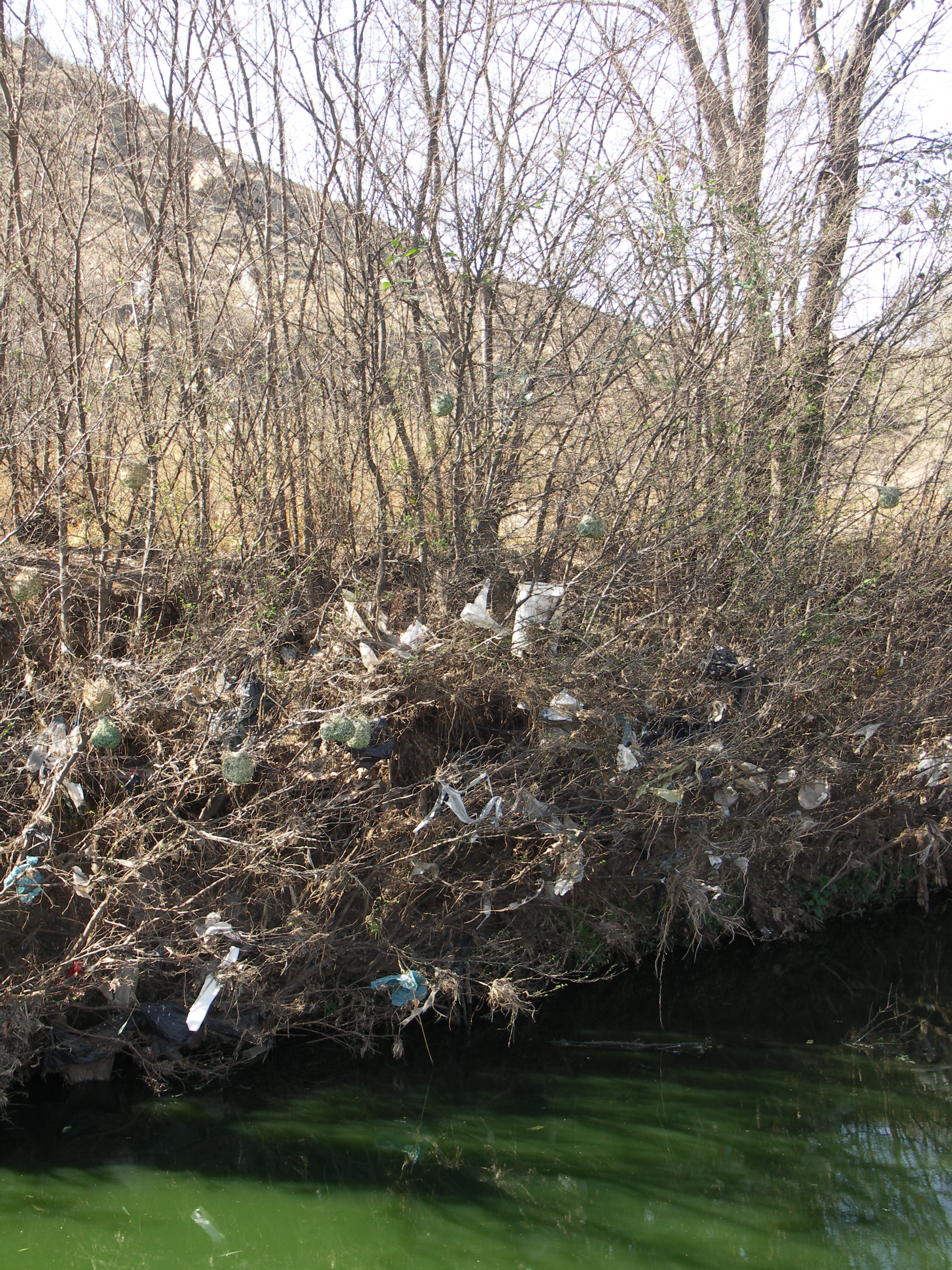 A riverbank filled with plastic bags