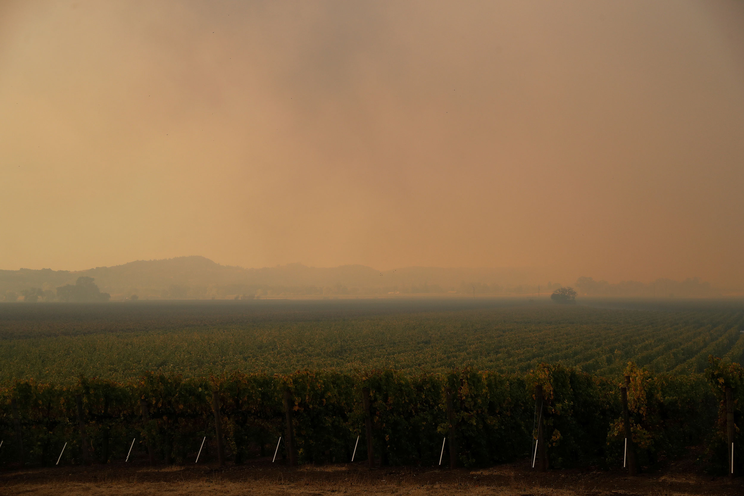 A vineyard is shown with mountains off in the distance with smoke clouding the entire sky.