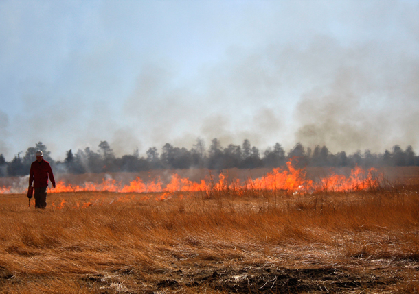 Prescribed burning in Arizona