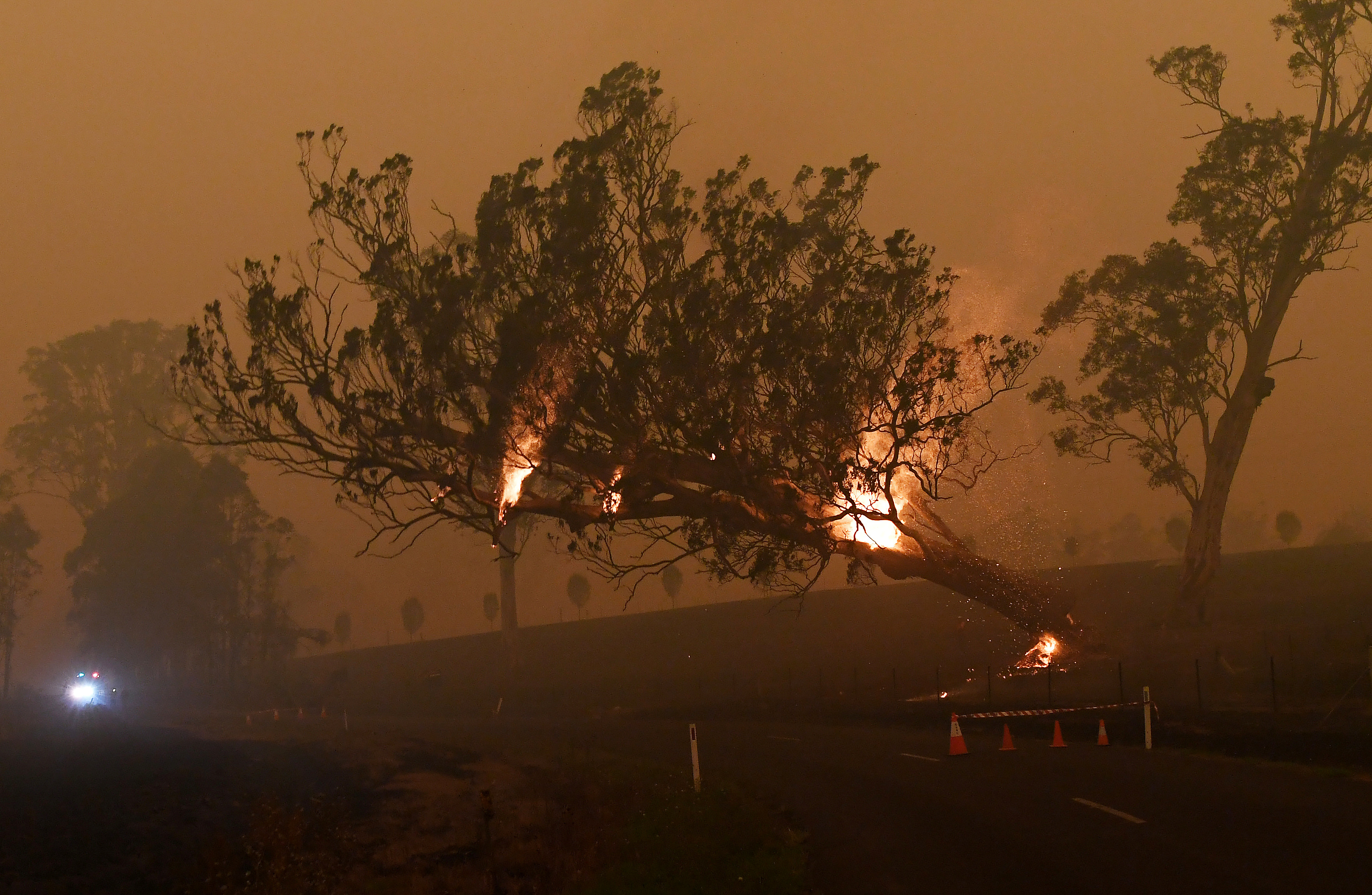 A burning gum tree is felled to stop it from falling on a car in Australia.