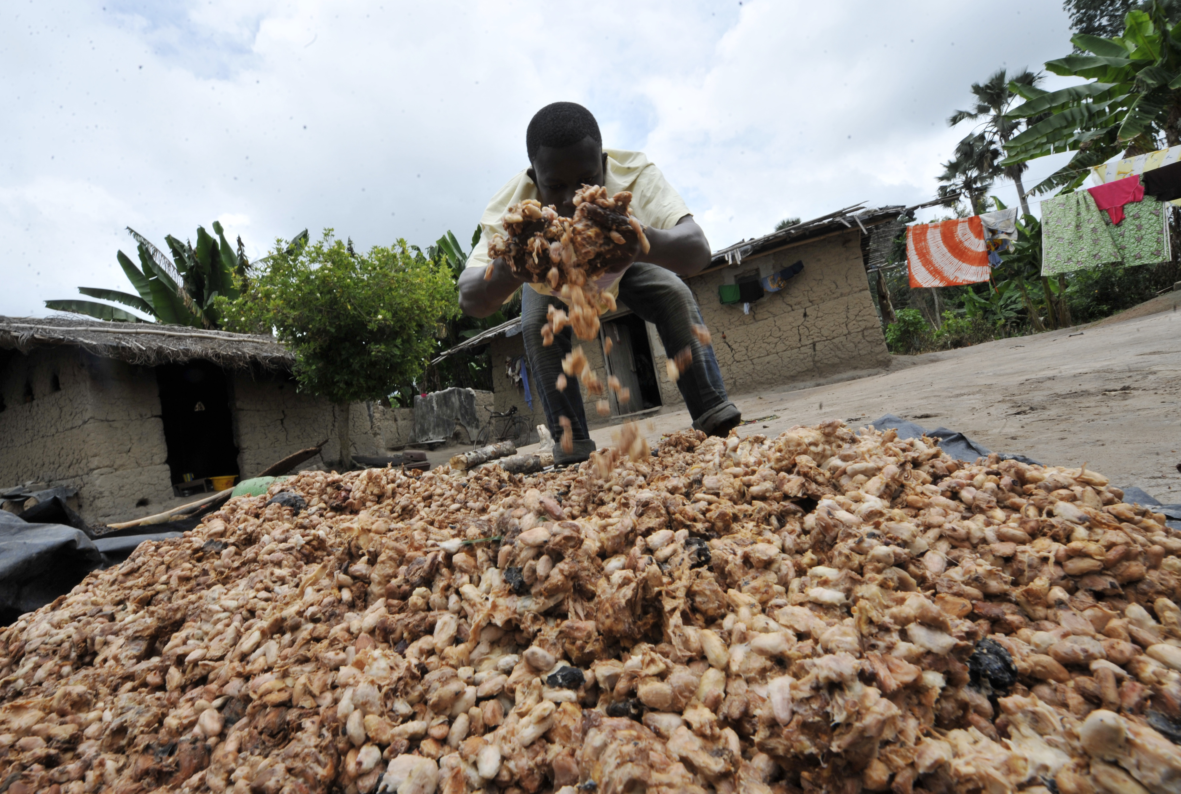 Nestle chocolate is produced from child labor, new report says ...