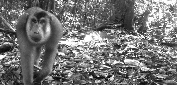 Фото в лесу скрытая камера