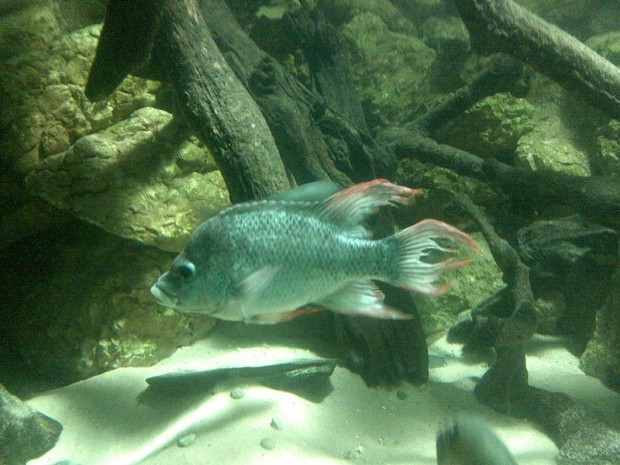 Rare fish essay
