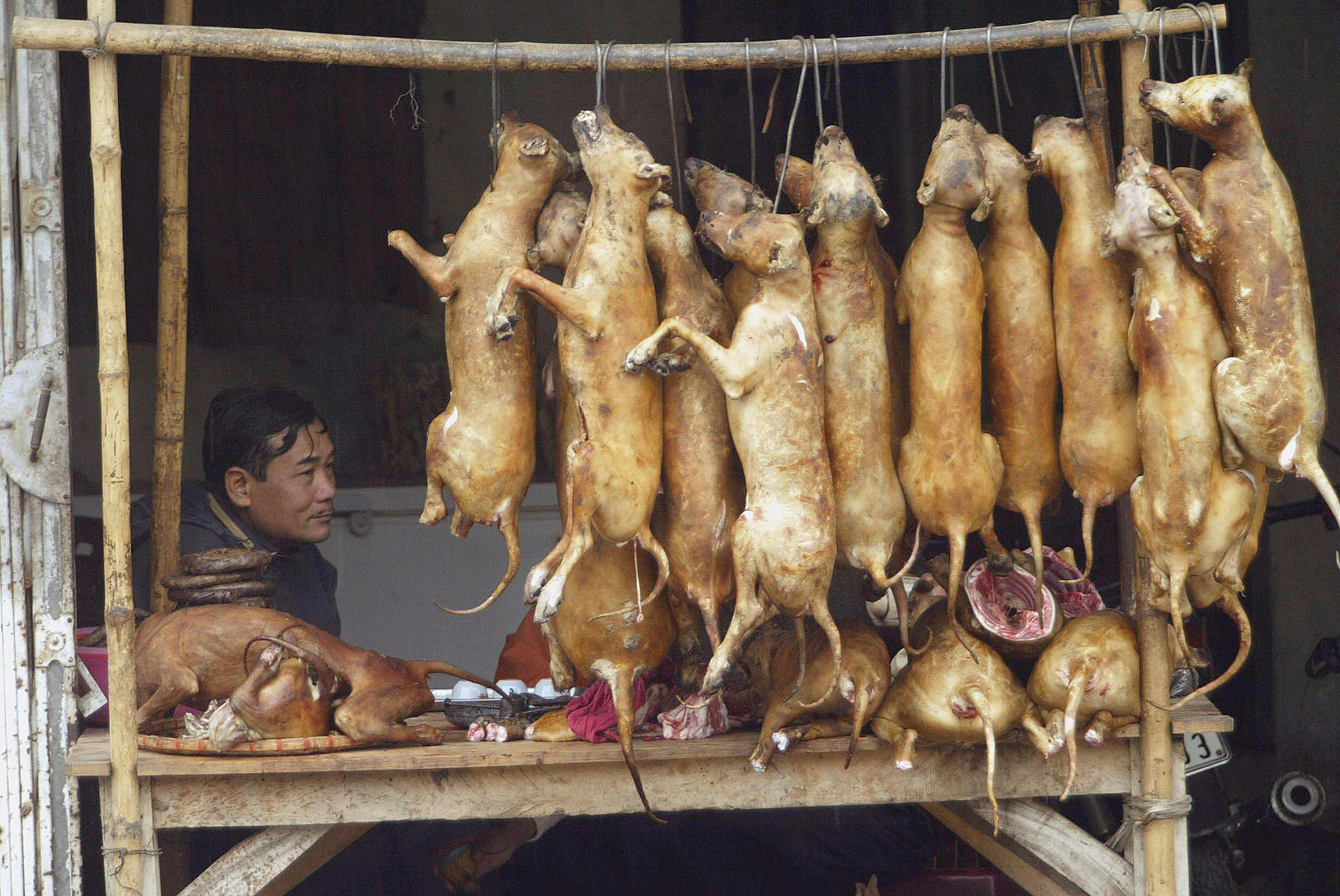 Vietnam's dog thieves ...