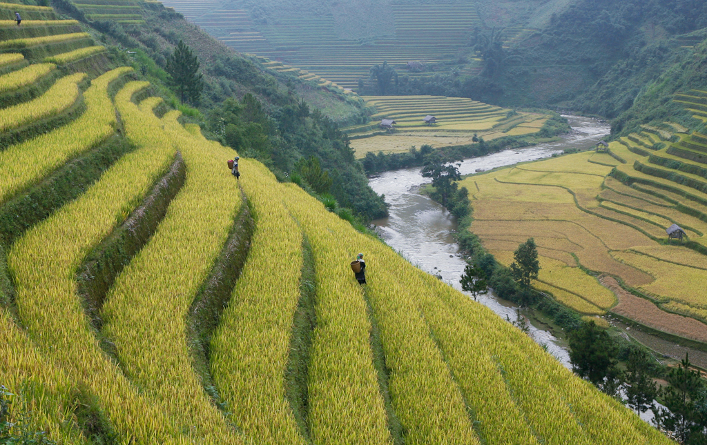Rice fields of asia from above and below public radio for What are terraces
