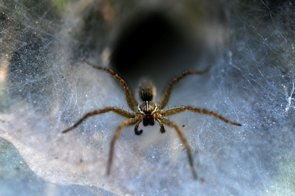 Spiders use 3D vision to pounce on prey | Public Radio ...