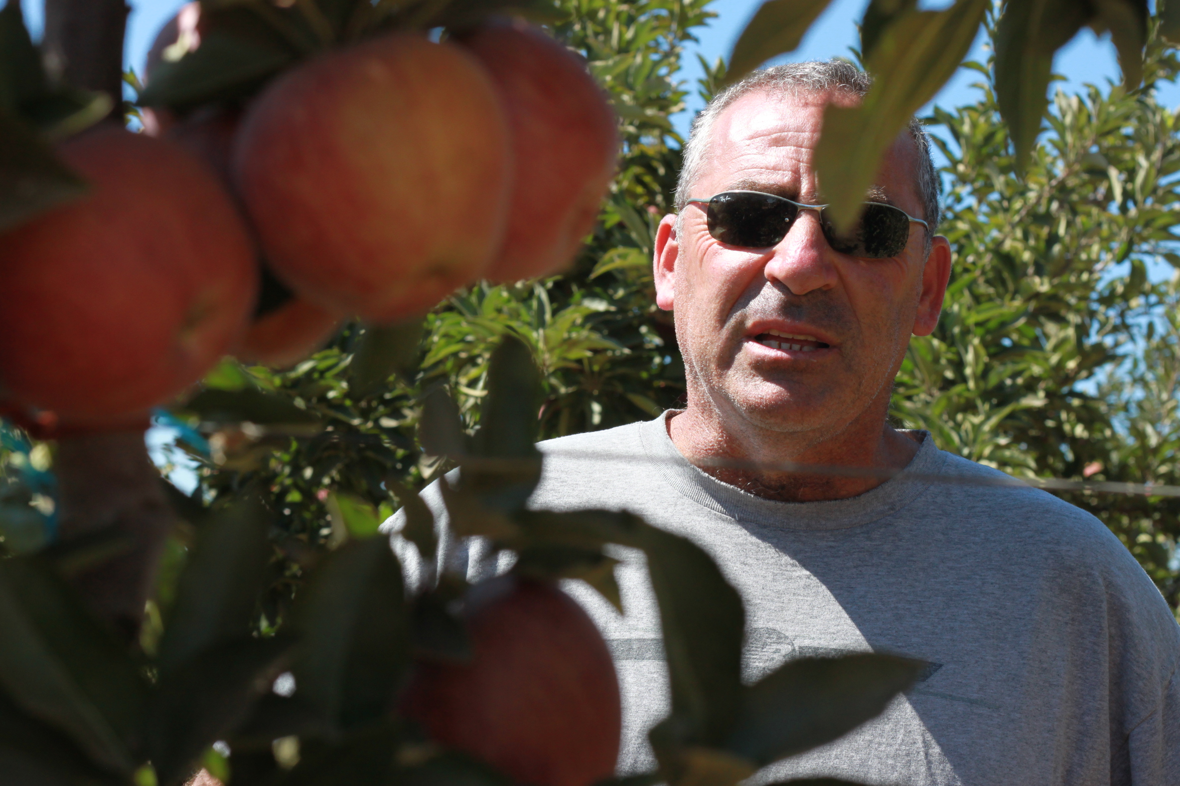 Gabi Kuniel in his orchard of Red Delicious apples, a few hundred feet away from the border fence.
