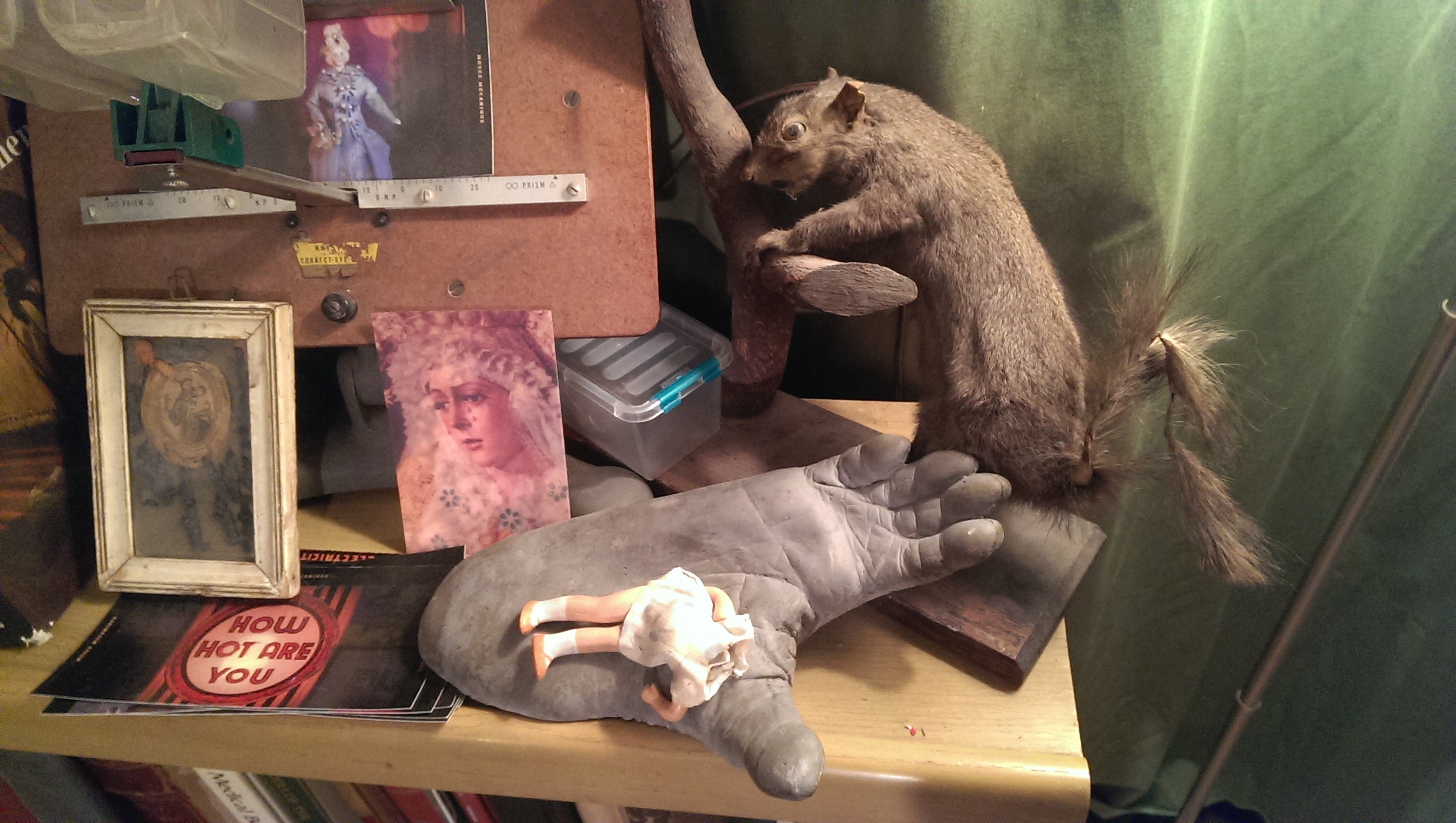 Artifacts from the Morbid Anatomy Library in Brooklyn.