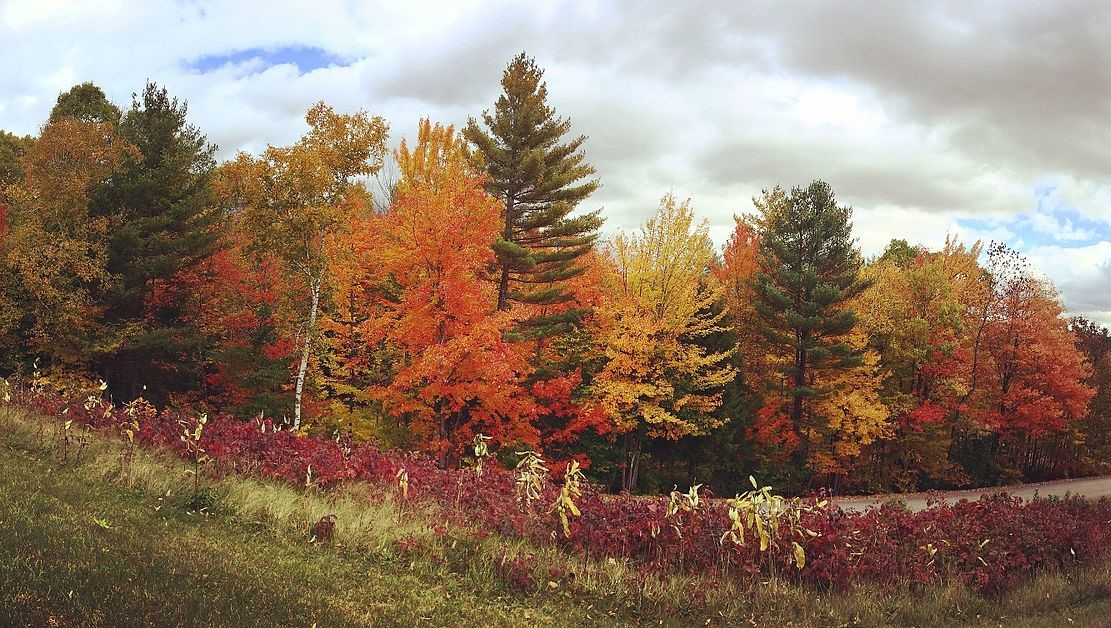 The Hubbard Brook Experimental Forest, pictured here, has been a boon for forest science.