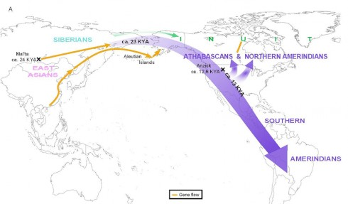 A graphic from the Raghavan et al. paper in Science illustrates the team's finding that the ancestors of present-day Native Americans entered the Americas as a single migration wave from Siberia.