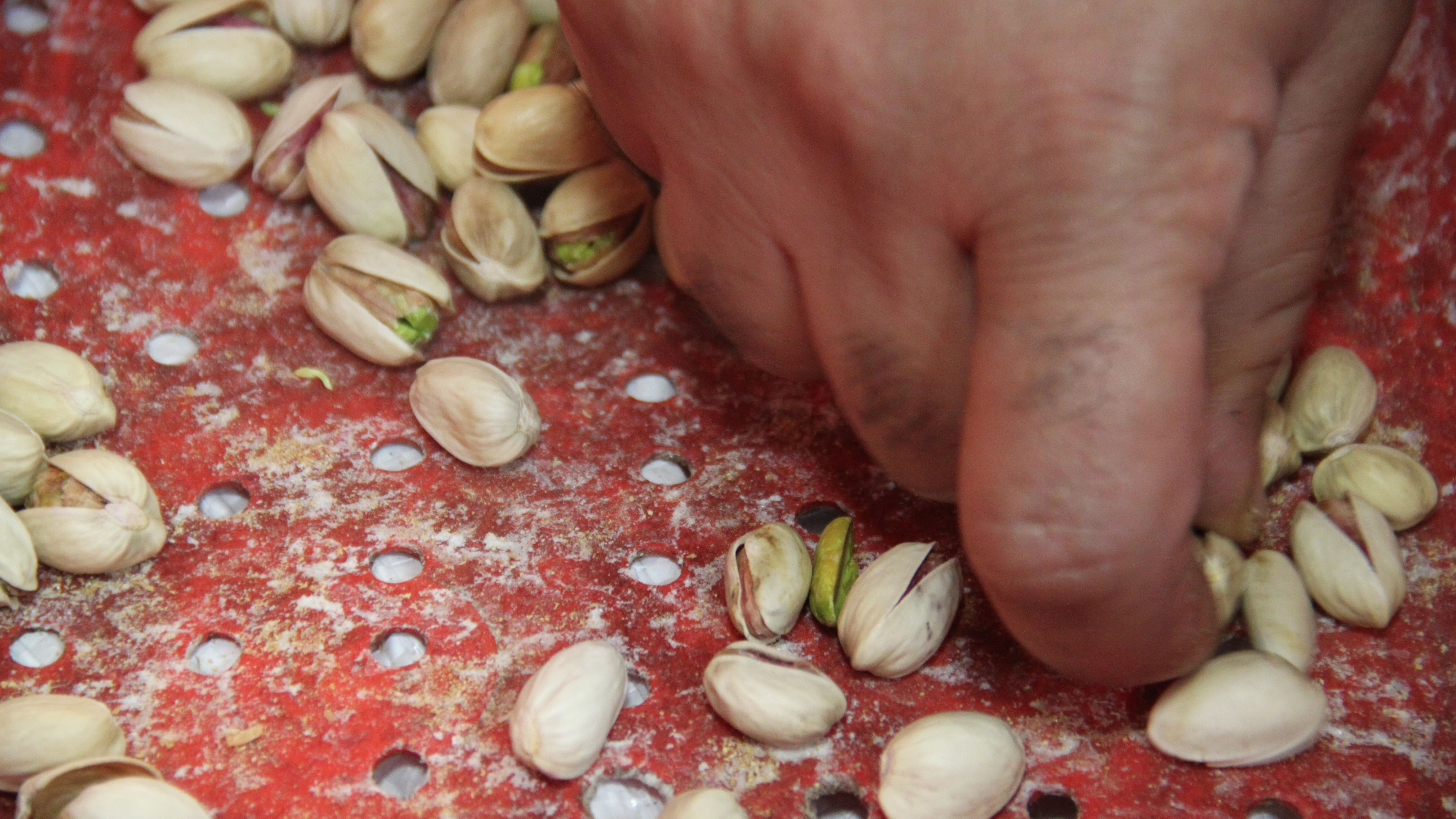 Mohammed Shehada sorts a bag of pistachios, weeding out the American-grown nuts from what are supposed to be Iranian-grown ones. American pistachios are bigger and lighter in color, and the shells are slightly pointier.