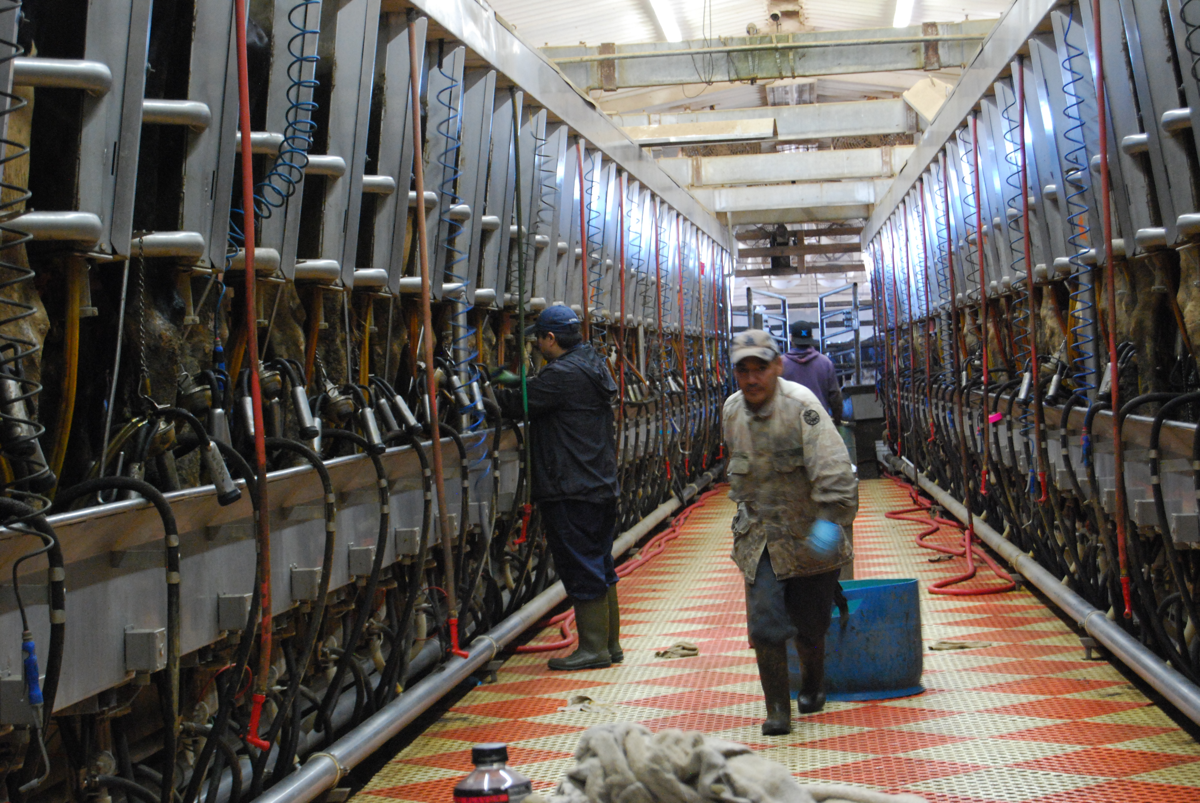 Perhaps 70 percent of workers at Idaho's dairy farms are foreign-born, mostly from Mexico, Guatemala, and Nicaragua