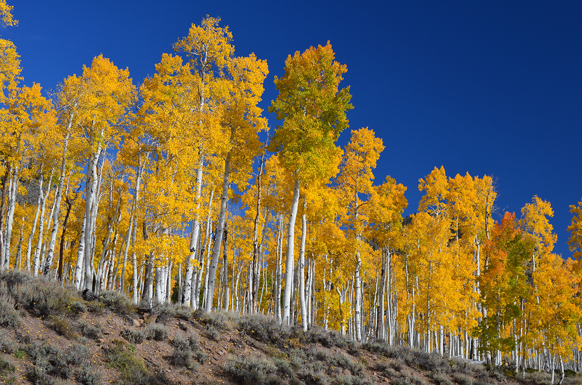 Image result for panda aspens utah