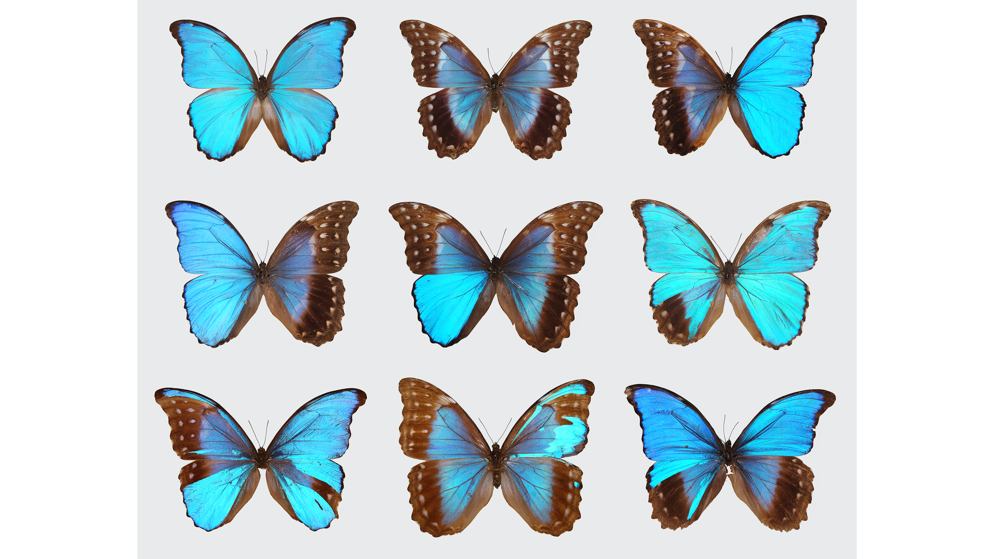 These butterflies aren't ordinary males and females