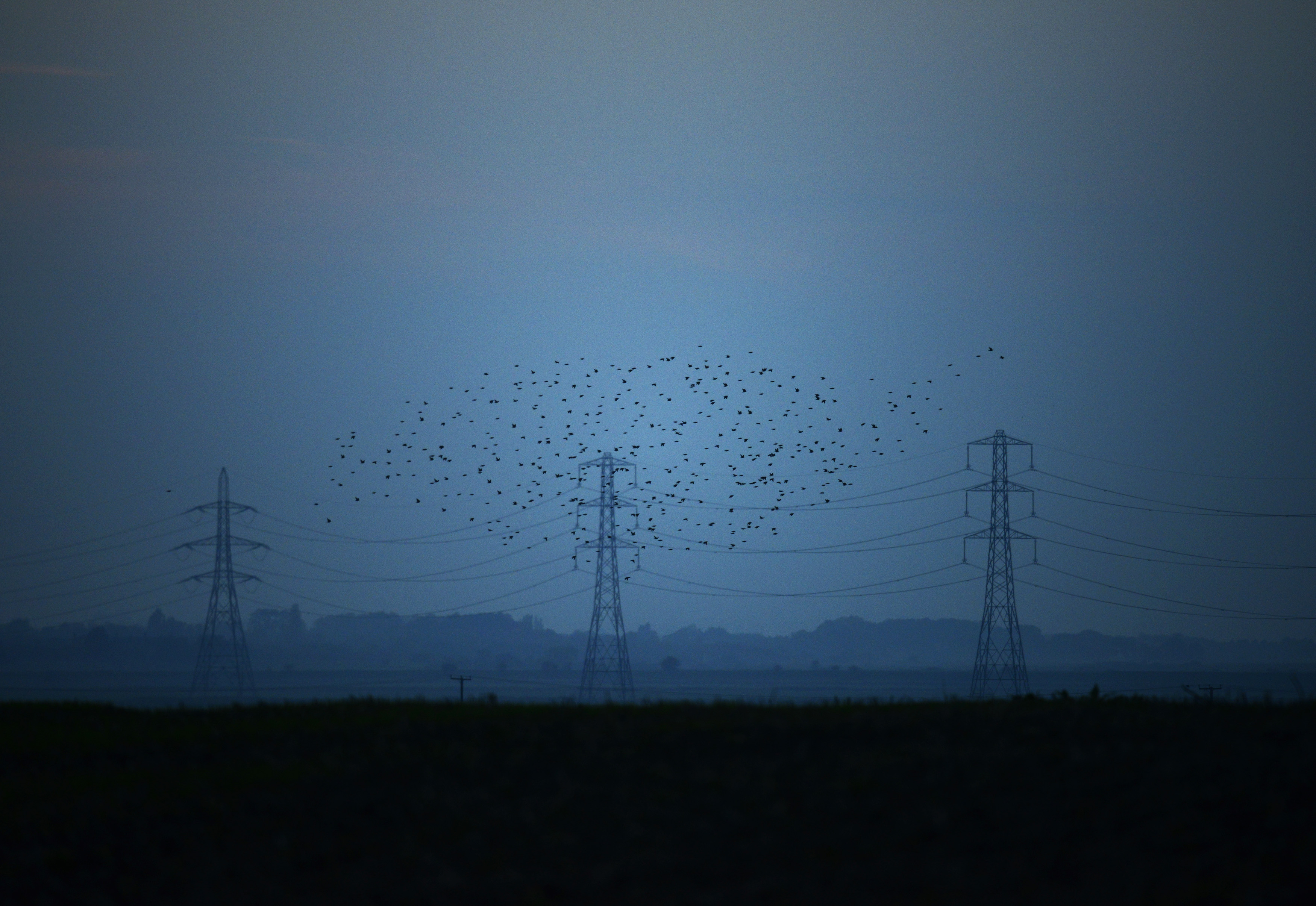 Migrating starlings fly at dusk past electricity pylons silhouetted by the sunset of a clear autumn evening in the Kent countryside, in Graveney, Britain, October 26, 2015.