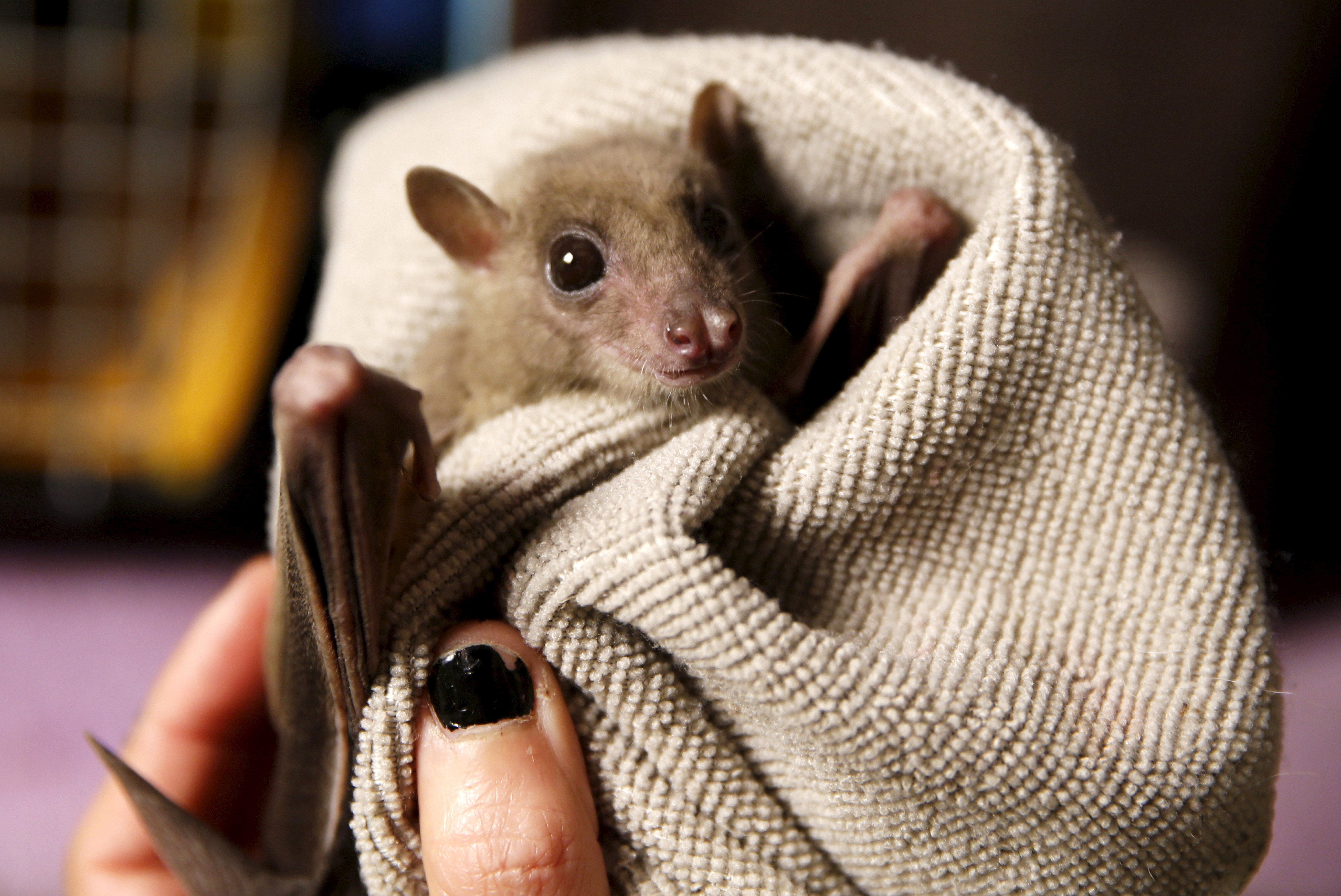 Bats are special. But not in a good way.