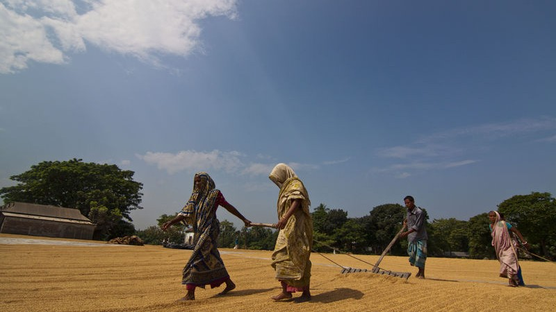 bangla lead
