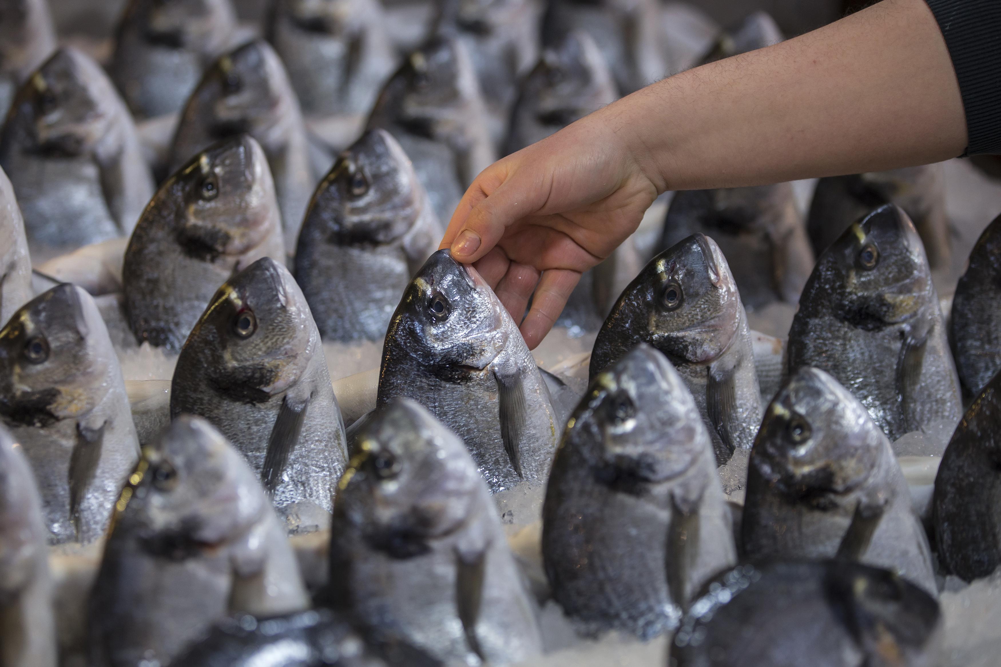 Выставка продажа рыбы
