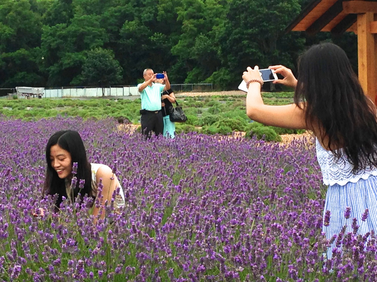 Lavender Farms In Long Island Ny