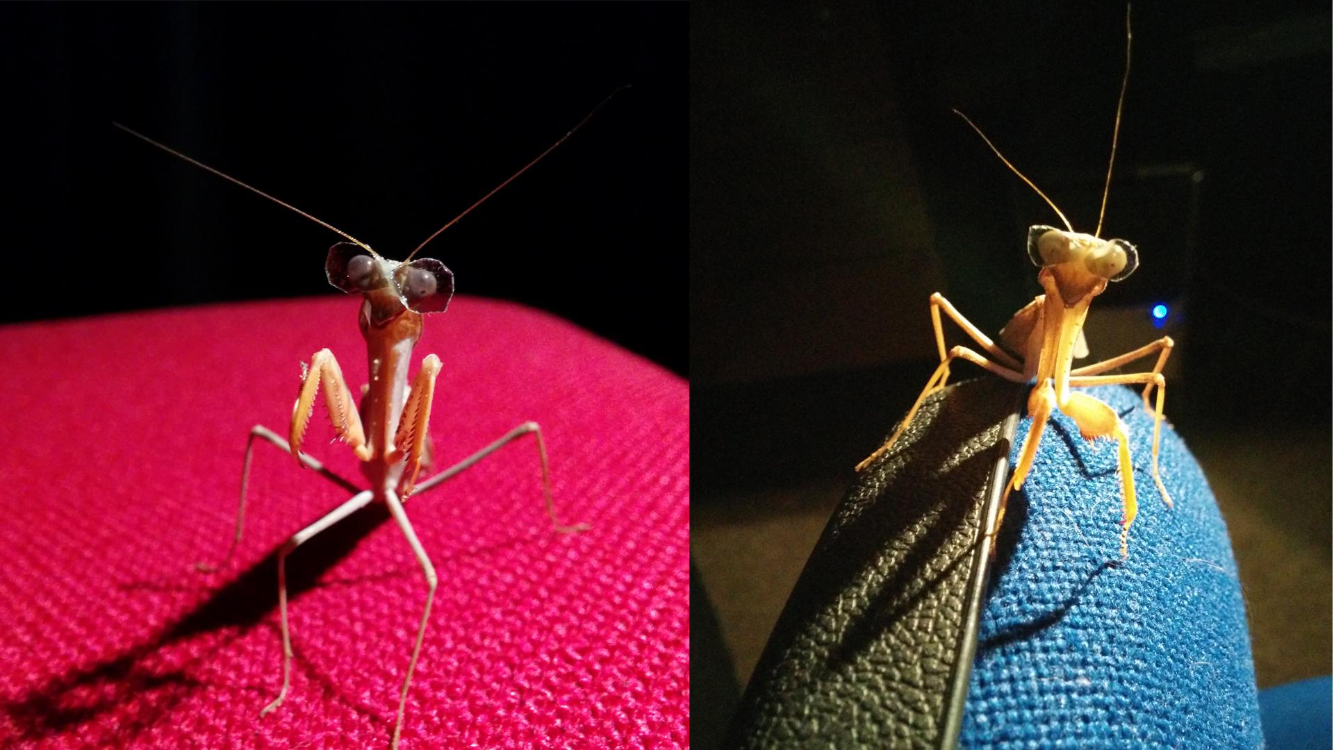 It's strange, but true — this is a praying mantis wearing 3-D ...