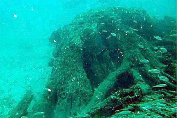After 50 000 years buried under the ocean floor an for Mexico mobel