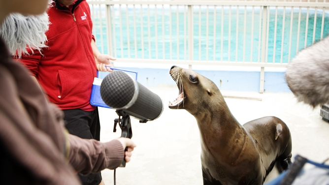 Capturing the sounds of wildlife