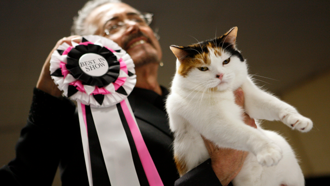 The CFA-Iams Cat Championships at Madison Square Garden.