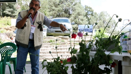 A poppy farmer stands in front of a poppy plant and talks with a mic in his hand.