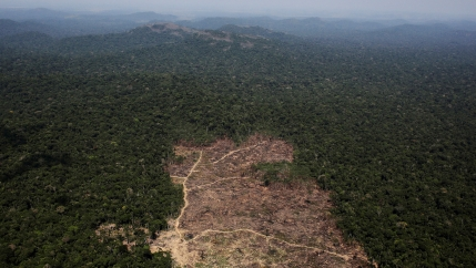 An aerial view of a tract of dry land cleared by loggers and farmers surrounded by green tree tops.