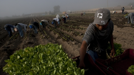 Nearly 20 percent of US food is imported. As imports of food has spiked, like lettuce from this farm in Guanajuato, Mexico, so have outbreaks of foodborne illnesses in the US.