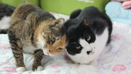 Two cats put their heads together in a snuggle.