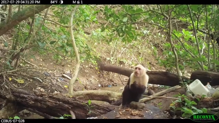 In a frame grab from a video, a monkey is hunkered over a rock in the stream, about to put food in its mouth