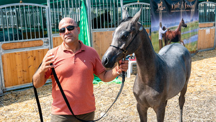 A man is shown wearing a salmon-colored collard shirt and sunglasses while holding the reins of a horse.