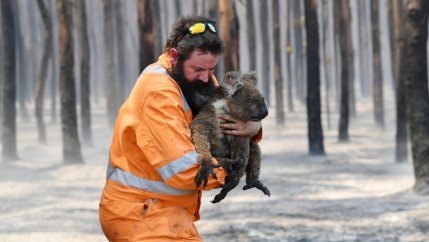 A man on an orange jumpsuit holds a koala with burned feet.