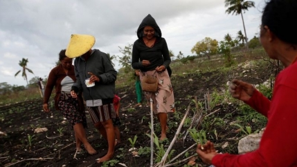Sumbanese villagers work on a field seeding peanuts in Hamba Praing village, Kanatang district, East Sumba Regency, East Nusa Tenggara province, Indonesia, Feb. 23, 2020.