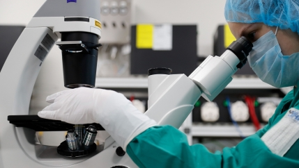 A scientist examines COVID-19 infected cells under a microscope during research for a vaccine against the coronavirus disease (COVID-19) at a laboratory of BIOCAD biotechnology company in Saint Petersburg, Russia, May 20, 2020.