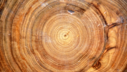 Fossilized tree rings