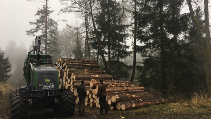 """This forest in a region of Austria known as the wood quarter is managed according to """"close-to-nature"""" practices, or Pro Silva standards."""