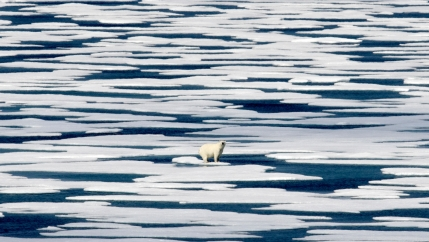 A polar bear is shown in the distance standing on a piece of ice among a large grouping of flat floating ice pieces.
