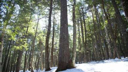 Forests cover about 80% of the Maritime Provinces of eastern Canada. Around half of that land is owned by smallholders.