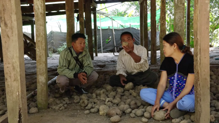U Saw Mhue Dee, U Saw Benjamin and Daw Naw Lay Lay explain the process of growing elephant foot yam, sheltered from the afternoon heat under a stilt house in Paungdawgyi Village.