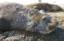 Seal with a tracking tag