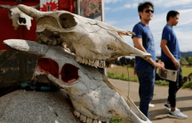 irradiated cattle skulls in Japan as tourists explore Fukushima
